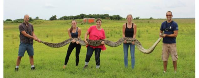 Second-largest snake ever caught in Florida