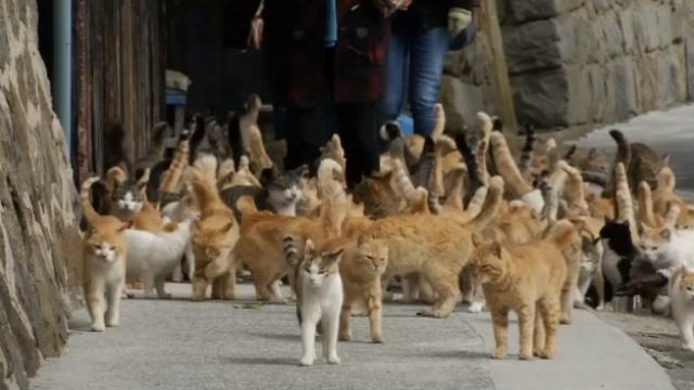 There's an Island in Japan Where Cats Outnumber People 6 to 1