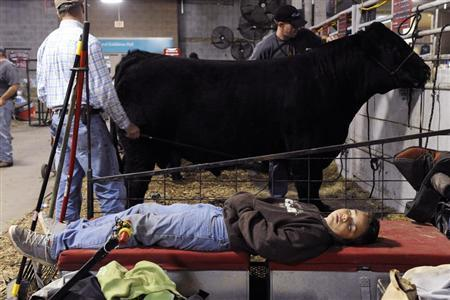 Boy takes a nap during the American Royal Livestock Show in Kansas City, Missouri.