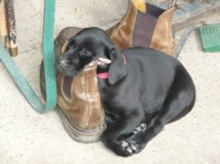 Dogs asleep in strange places