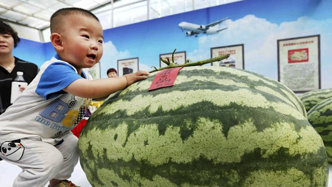 A child touches the biggest watermelon on display during an annual watermelon festival in Daxing district in Beijing
