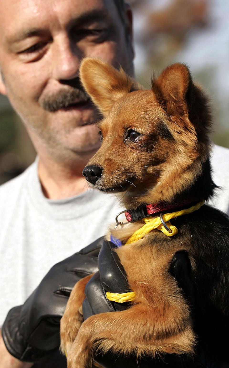 In this Oct. 15, 2005 photo, dog bite expert Jim Crosby, from Jacksonville, Fla., holds a Pomeranian mix dog at  Muttshack Animal Rescue Foundation  shelter in New Orleans, La., Saturday, Oct. 15, 2005.   (AP Photo/Don Ryan)