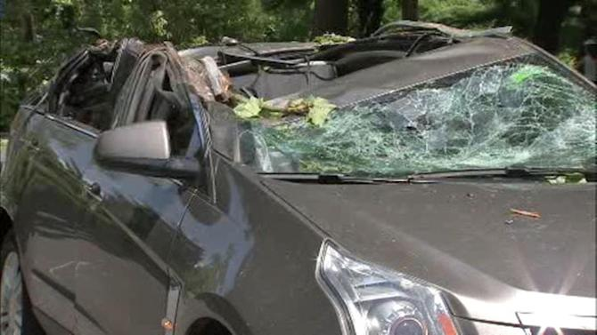 Tree falls on car on Martin Luther King Drive, 1 hospitalized