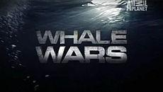 Animal Planet's 'Whale Wars' Renewed For Sixth Season: TCA