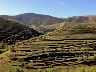 Terraced vinyards in Portugal&#39;s Douro wine region. Starting near the remote border with Spain and cascading downriver to the sea at Porto, the historic port-producing valley is home to dozens of large quintas and more than 31,000 small growers