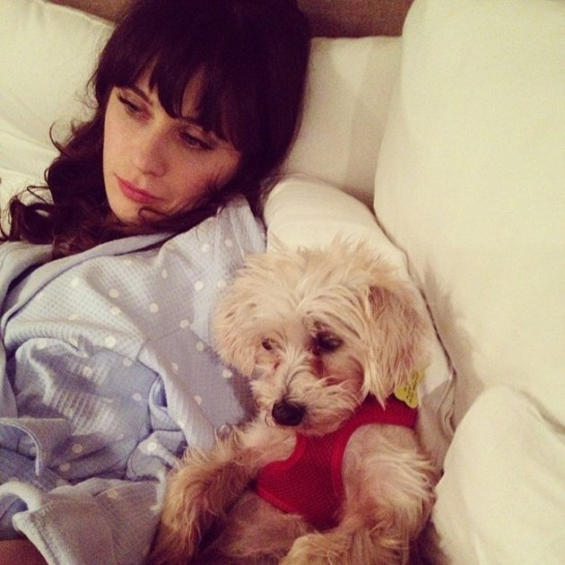 Zooey Deschanel snuggles up with her cute dog for a quiet night in. Copyright [Instagram]