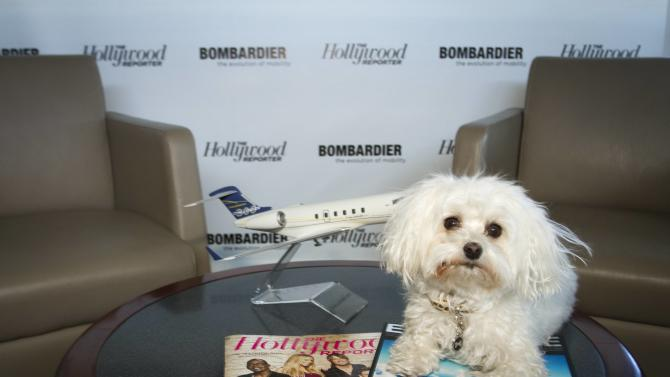 IMAGE DISTRIBUTED FOR BOMBARDIER - Kristine Miller's dog, Bella, is seen at The Hollywood Reporter's Palm Springs Shuttle presented by Bombardier Business Aircraft - Day 1 on Friday, January 4, 2013 in Palm Springs, California.  (Photo by Adam Rose/Invision for Bombardier/AP Images)