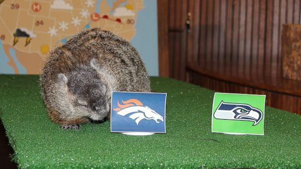 Super Bowl 2014 Predictions: Animals Make the Call