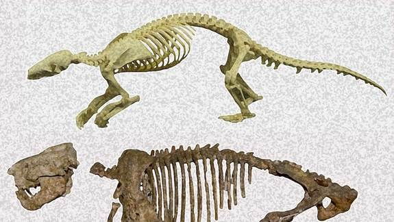 Ancient Termite-Digging Creature Added to Mammal Family Tree