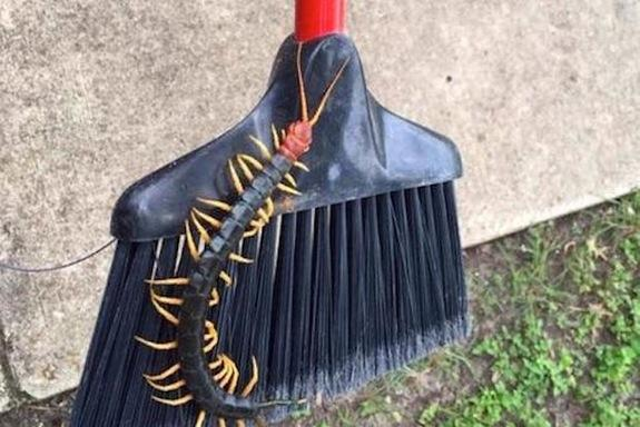 Giant Redheaded Centipede Photo Goes Viral, Horrifies the Internet
