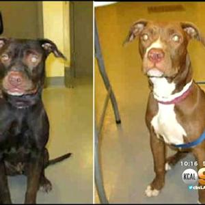 One Dog's Hair-Raising Tale Of Theft, Concealed Identity Has A Happy Ending