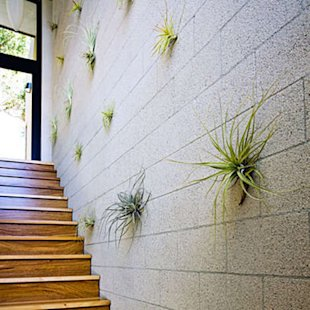 Air plants are mounted to concrete