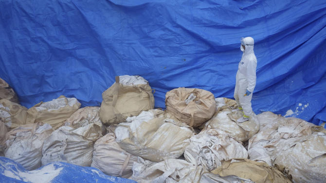 In this April 13, 2014 photo provided by Kumamoto Prefecture, a local government worker in white protective overalls stands on top of bags of dead chickens after H5 virus was detected in two birds, at a poultry housing in Taragicho, Kumamoto Prefecture, western Japan. The 112,000 chickens were ordered culled on Monday, April 14 after the two tested positive for a highly pathogenic avian influenza at a farm in the town. (AP Photo/Kumamoto Prefecture)