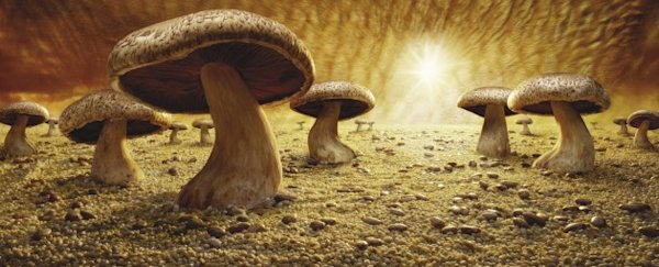 &quot;Mushroom Savanna&quot;. (Foto cortes&#xED;a de Carl Warner)