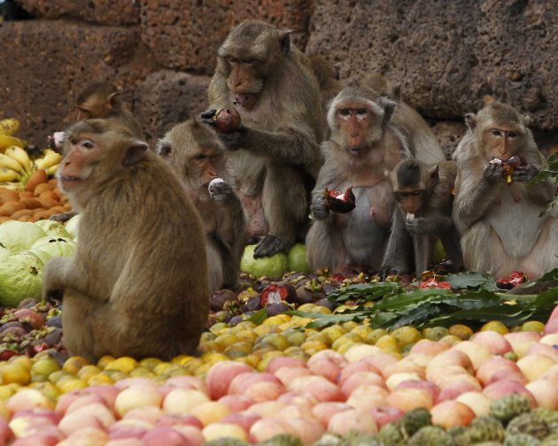 Monkeys eat fruits during the annual Monkey Buffet Festival in front of the Pra Prang Sam Yot temple in Lopburi province