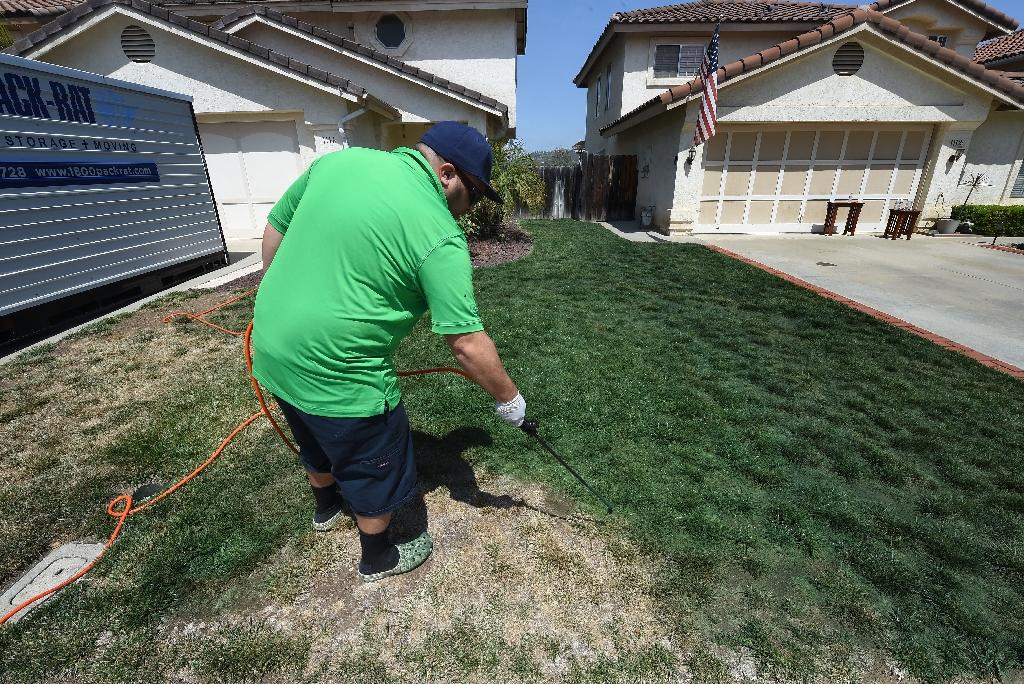 Drought-hit Californians paint their lawns green