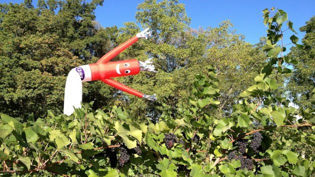 Inflatable Flailing Arm Tube Men Double as Scarecrows (ABC News)