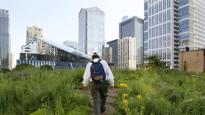 In this photo taken Tuesday, July 12, 2011, beekeeper Michael Thompson, makes his way through the secret garden of wildflowers and native grasses on top of City Hall in Chicago to check on over 100,000 bees. Beekeeping is thriving in cities across the nation, driven by young hobbyists and green entrepreneurs. The city of Chicago's hives, nine in all, on rooftops and other government property are just part of the boom in urban beekeeping. (AP Photo/Charles Rex Arbogast)