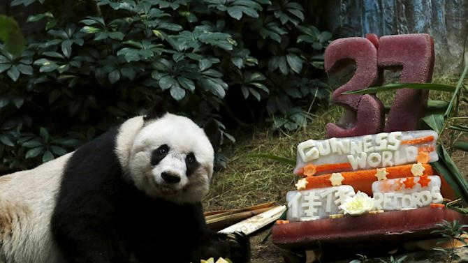 Giant panda Jia Jia looks on beside a birthday cake made from ice and vegetables as she celebrates her 37-year-old birthday at the Hong Kong Ocean Park