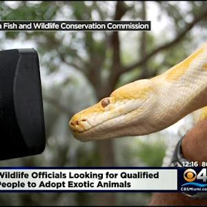 Experienced Pet Owners Can Adopt Exotic Species