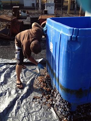In this photo provided by the Hawaii Department of Land and Natural Resources, a worker removes barnacles and other marine life from the bottom of a large blue plastic bin in Honolulu on Wednesday, Sept. 19, 2012. State and federal officials are trying to determine whether the bin bearing the name of a Japanese seafood company is the first confirmed piece of marine debris from last year's tsunamis to arrive in Hawaii. (AP Photo/Department of Land and Natural Resources, Division of Aquatic Resources)