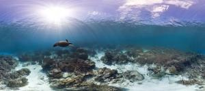 Explore the World's Coral Reefs with Google Street View