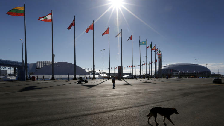 SOCHI SCENE: Stray dog danger