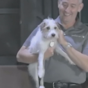Long-Lost Dog's Hilarious Family Reunion