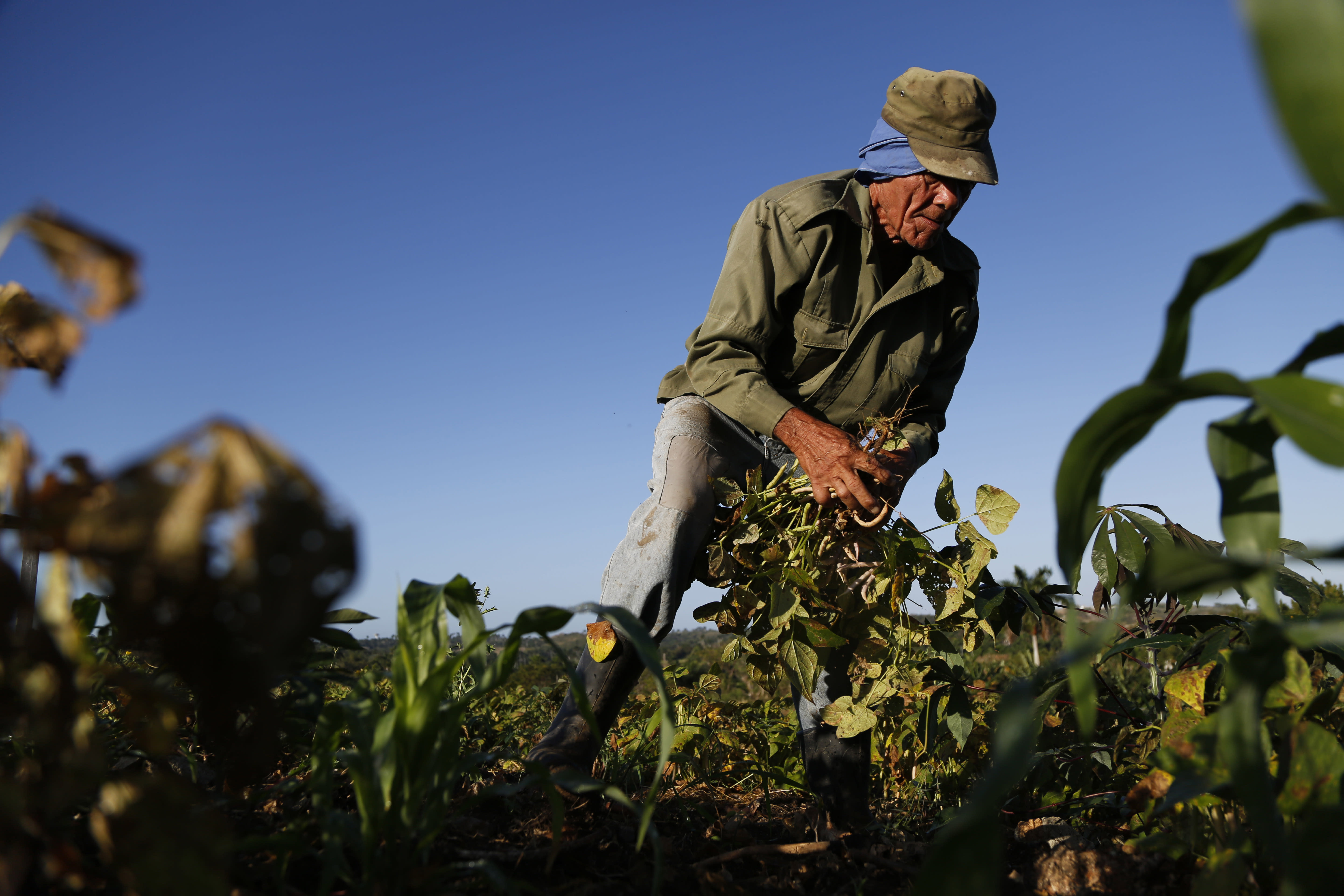 Cuba looks north to US farmers for help with food crisis