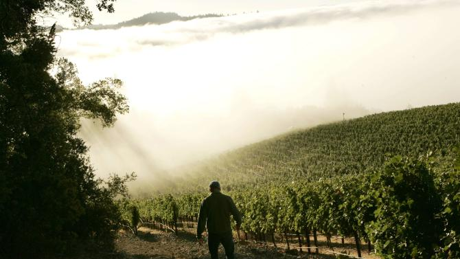 Bruce Cakebread heads to a vineyard shrouded in fog during the wine harvest season in Rutherford, California in this file photo