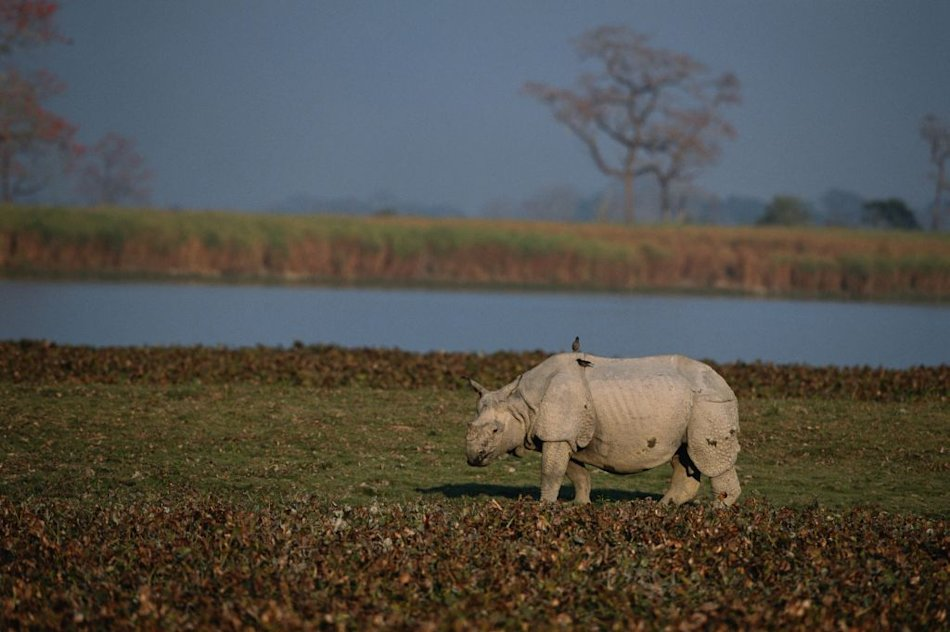 Travel 2013 destinations Kaziranga