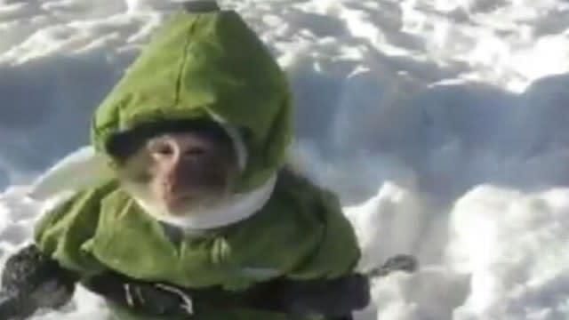 Monkey Wears Snow Suit in Funny YouTube Video