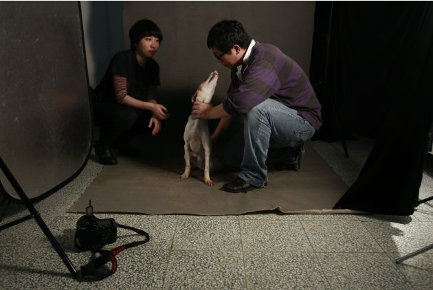 In this photo taken on Monday, April 9, 2012, Taiwanese photographer Tou Chih-kang calms an excited dog  before trying to make a portrait in his makeshift studio moments before the dog is to be put do