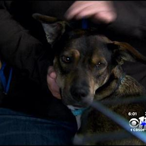 Woman: Shelter Spayed My Dog Without Permission