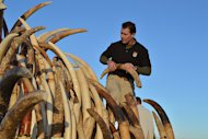 On Nov. 14, 2013, the U.S. Fish and Wildlife Service (FWS) destroyed its stockpile of seized ivory.