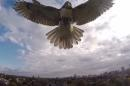 """After the scuffle, the drone said """"I fought the hawk, and the hawk won."""""""