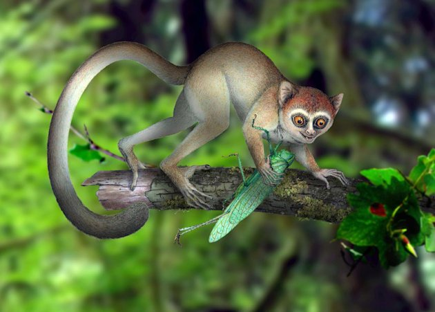 This undated handout artist rendering provided by Xijun Ni, Institute of Vertebrate Paleontology and Paleoanthropology, Chinese Academy of Sciences shows a reconstruction of Archicebus achilles in its natural habitat of trees. One of our earliest primate relatives was a hyperactive wide-eyed creature so small you could fit a few of them in your hand, if they would just stay still long enough, new fossil evidence shows. (AP Photo/Xijun Ni, Institute of Vertebrate Paleontology and Paleoanthropology, Chinese Academy of Sciences)