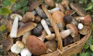 Wild Mushroom Warning After Soup Kills Two