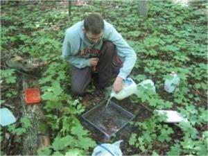 Invasive Earthworms Harming Great Lakes Forests