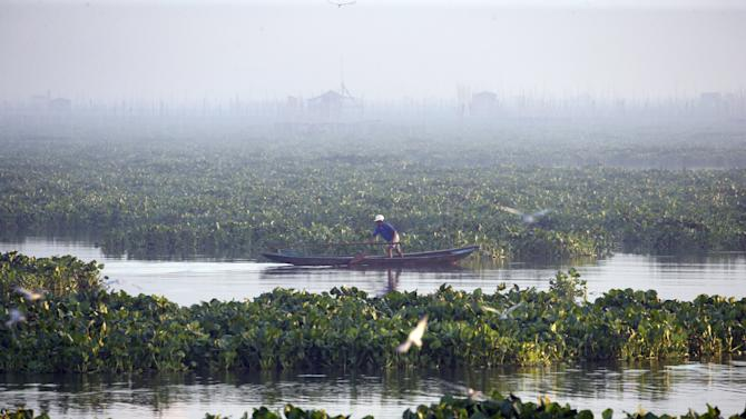 A fisherman inspects fish traps amidst water lilies at Laguna de Bay in Muntinlupa, Metro Manila