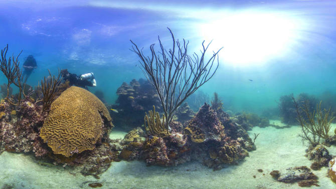 """This Tuesday, Aug. 5, 2014 photo provided by Catlin Seaview Survey shows Marine protected reefs in the Florida Keys, Fla. U.S. government scientists hope people will soon be able to go online and get a 360-degree view of reefs and other underwater wonders, much like Google Map's """"street view"""" lets people look at homes. (AP Photo/Catlin Seaview Survey)"""