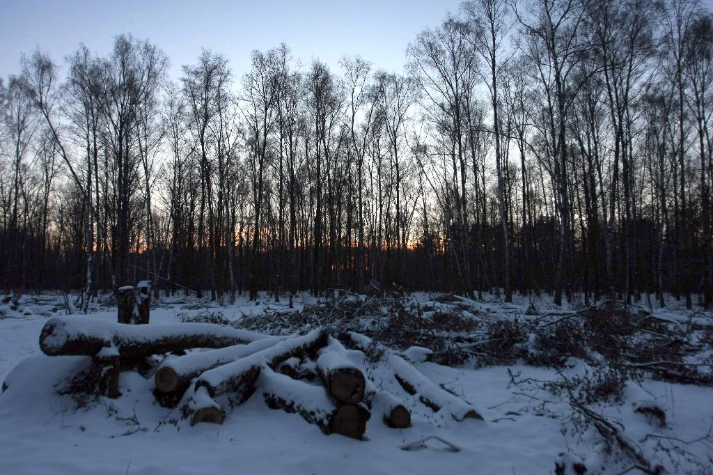 Russian deserter found after hiding in forest for over 10 years