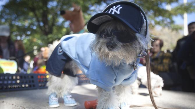A dog poses for photos during the 24th Annual Tompkins Square Halloween Dog Parade in New York