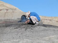 Doctoral student Bill Mitchell collecting a volcanic ash sample from the coal bed just above the final dinosaur extinction level.