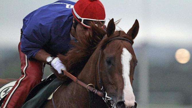 California Chrome, with exercise rider Willie Delgado in the saddle, gallops in the rain at Belmont Park race track in Elmont, NY., Thursday, June 5, 2014