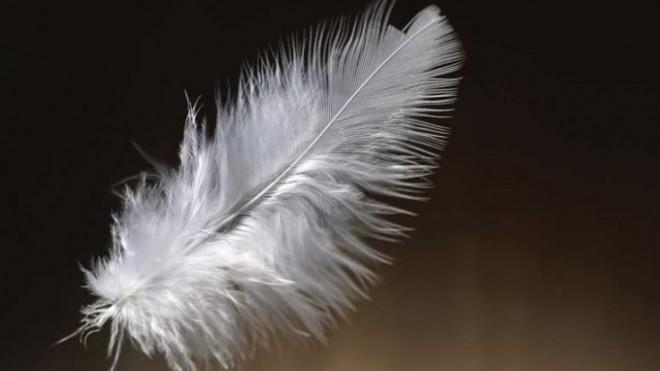 """Kansas pediatricians """"pulled a feather out of my child,"""" says Aaron Whittington. """"How crazy is that?"""""""