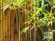 A study by the Bulacan Environment and Natural Resource Office recommends planting bamboo trees to mitigate soli erosion.