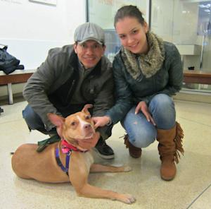 In this Jan. 18, 2013 photo provided by the American Society for Prevention of Cruelty to Animals, Richard Palacios and Natalya Prokenpenko pose with Hazel, a 2-year-old pit bull mix, who they adopted from the ASPCA's Adoption Center in New York. In order to be prepared for dog ownership, experts say you need to examine your lifestyle, home and finances. Then, you need to find the right match.  (AP Photo/ASPCA)