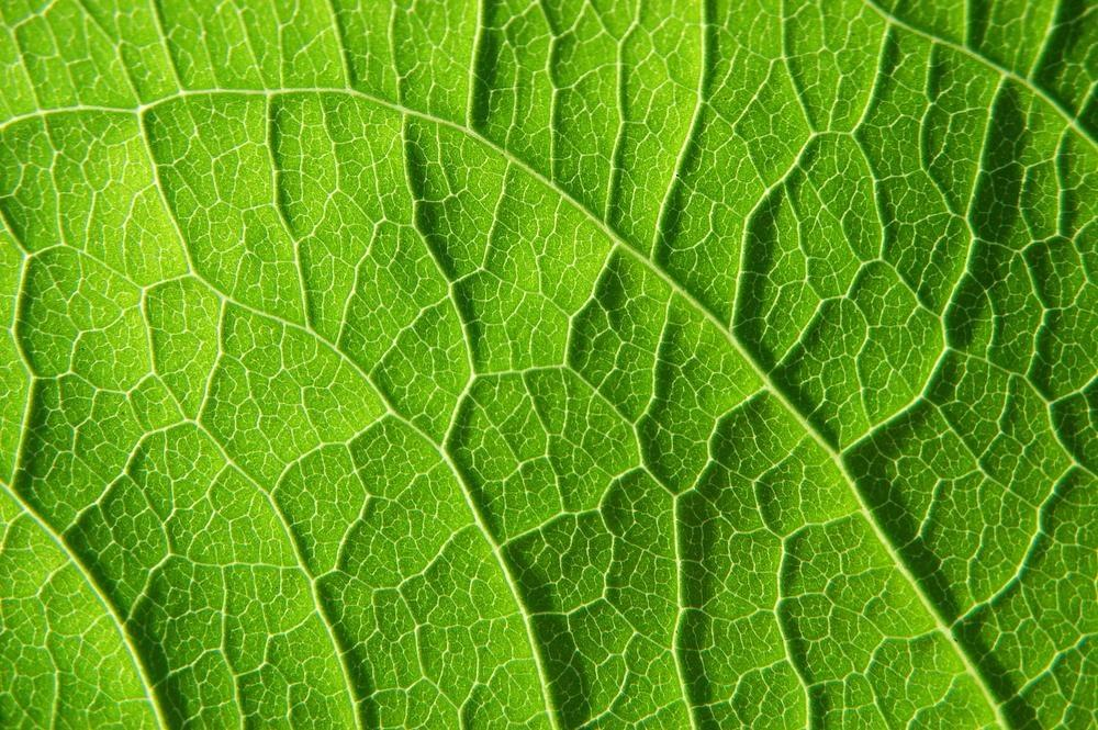 Material mimics plants by using sunlight for photosynthetic energy production