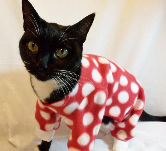 'Cats in Pajamas' Music Video Will Haunt Your Nightmeows